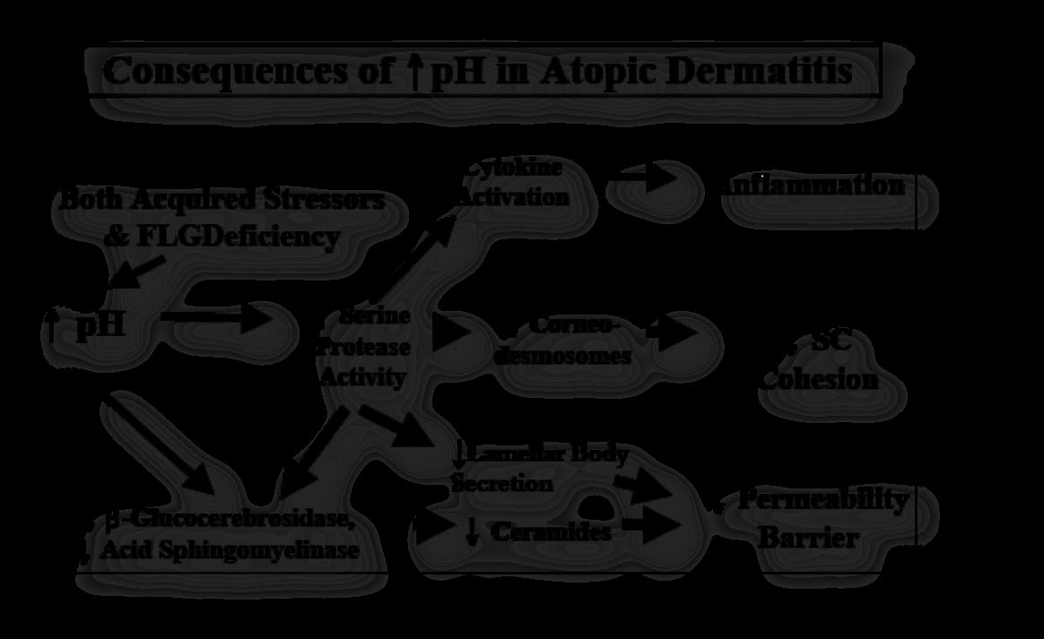 Consecuencias del PH en la Atopia