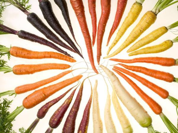 Zanahorias con distintos pigmentos